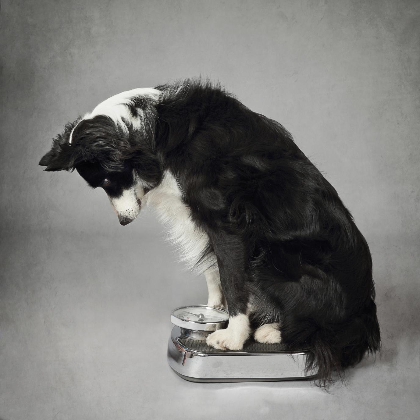 Futter- und Diätberatung (Ernährungsberatung)
