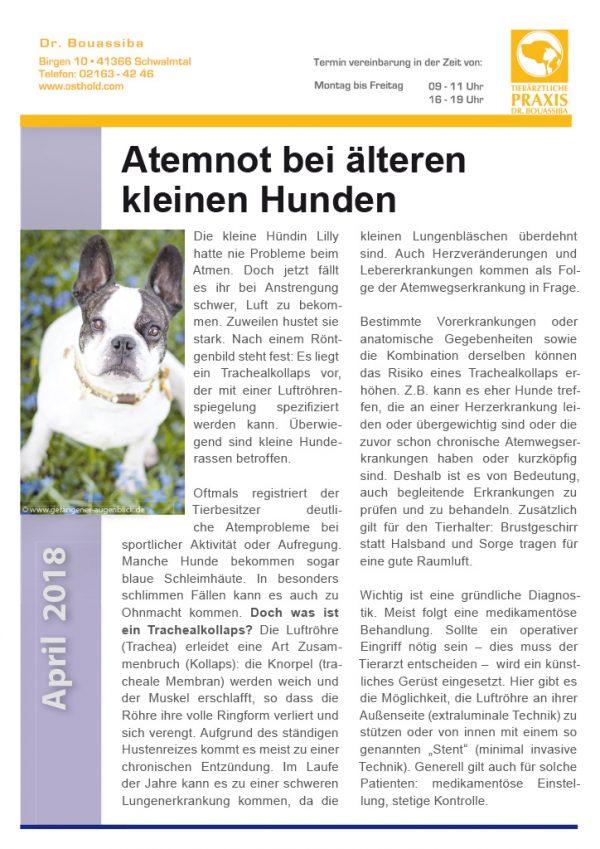 Tierpunkt Archive - Tierärztliche Praxis Dr. Cosima Bouassiba ...