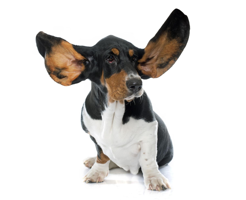 Ohrenheilkunde